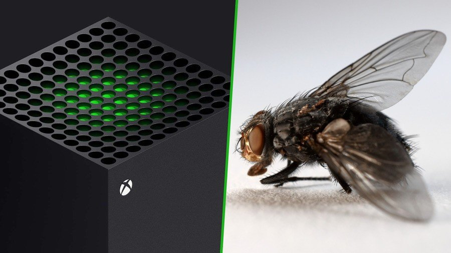 Random: 'There's A Fly In My Xbox', Says Series X Owner