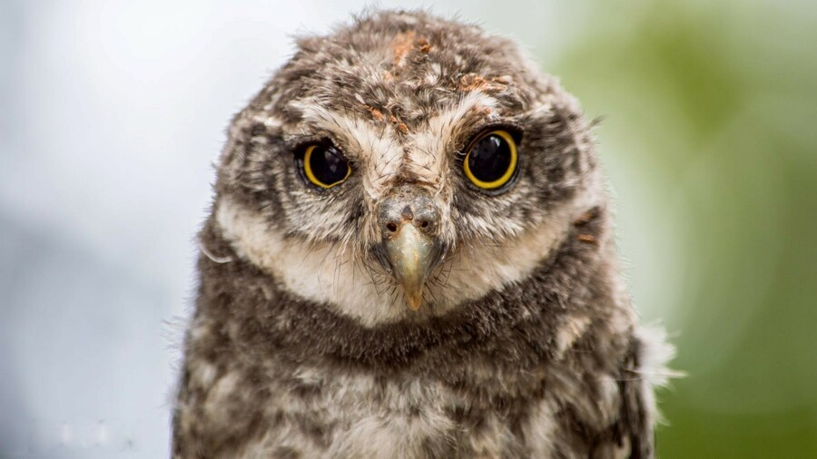 Random: Baby Owlet Hatches After Being Named By Xbox Fans