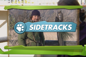Kinect Nat Geo TV: Season 1 - America The Wild Screenshot